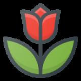 United States Wedding Flower and Decoration